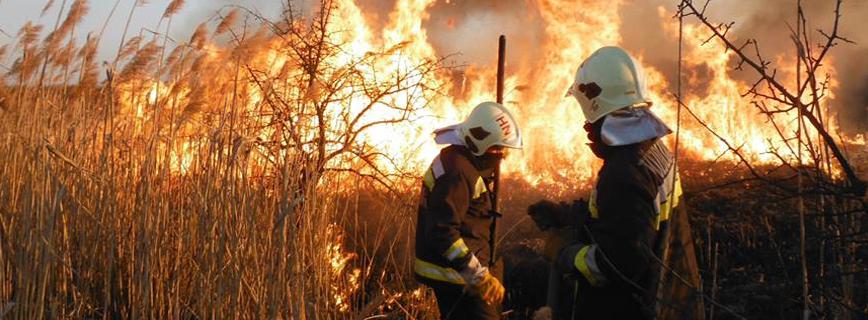 Tűzveszélyes tevékenységre vonatkozó szabályok aloldal fejlécképe